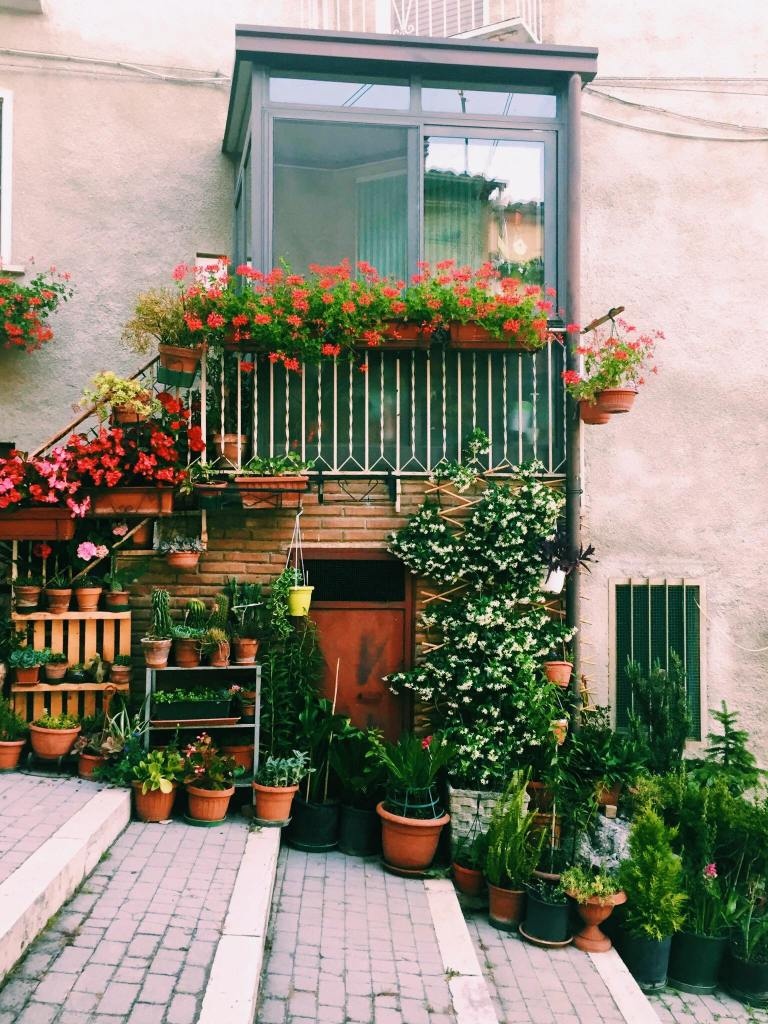 Doorway with stairs covered in red flowers and flower pots in Jelsi