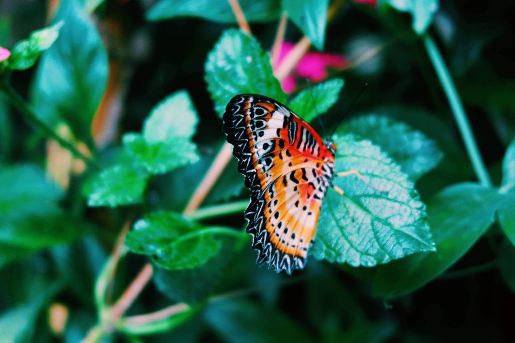 Red and orange butterfly on a leaf at the horniman Museum and Gardens