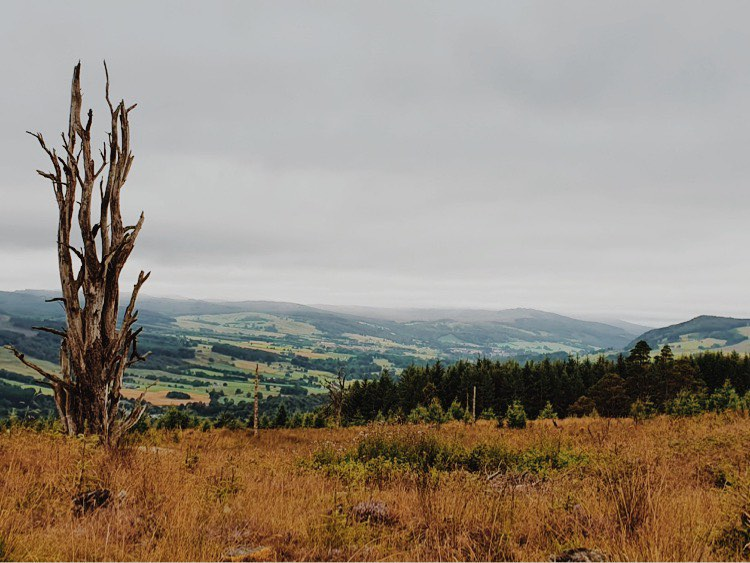 View from hike to Grandtully of hills and forests with one tall bare tree at the left.